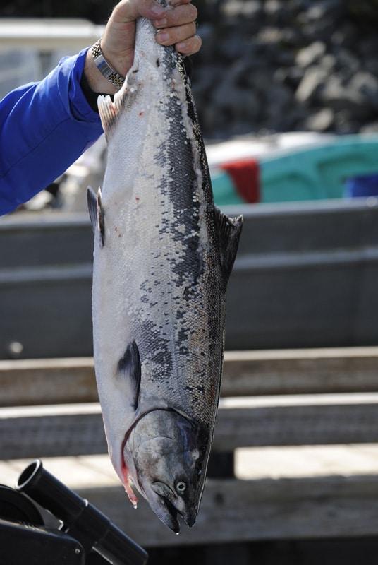 Half-Day Salmon Fishing - Sitka - True Alaskan Tours