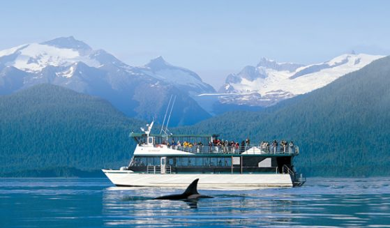 https://truealaskantours.com/wp-content/uploads/2015/12/WQOPL-1-wildlife-sightseeing-cruise1-559x327.jpg