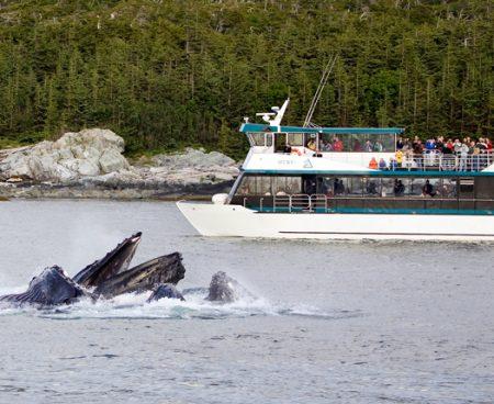 https://truealaskantours.com/wp-content/uploads/2015/12/WWWQ-4-whales-bubblenet-feeding1-450x368.jpg