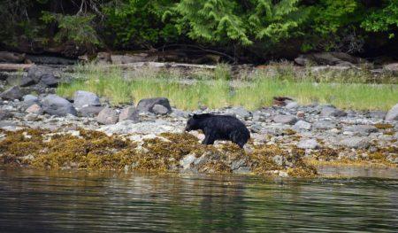 https://truealaskantours.com/wp-content/uploads/2020/07/neets-bay-bear-cruise-featured-450x263.jpg